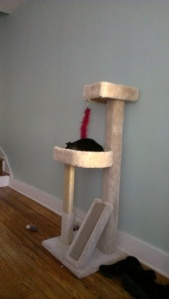 Scout sleeping on the new cat tree