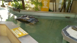 Turtle pond at the Hyatt