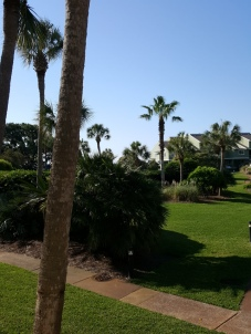 Picture of palm trees and grass
