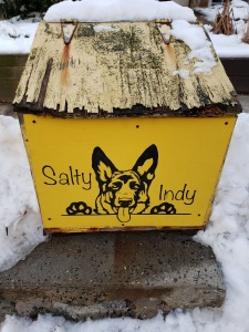 Salty Indy German Shepherd salt box art